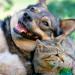 Thumbnail for Pet Diabetes
